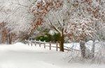 A First Snow